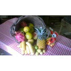 Le FRUTIVORE , assortiment de fruits