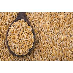 Farine intégrale de blé khorosan KAMUT bio Melbio