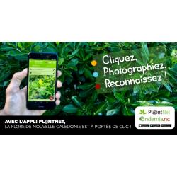 Pl@ntnet : Atelier de reconnaissance des plantes au Marché alternatif