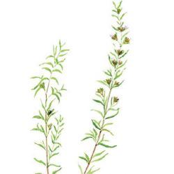 Eau aromatique SARIETTE 1L - Bioessentiel