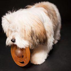 Kit de démarrage Univers Puppy en caoutchouc naturel