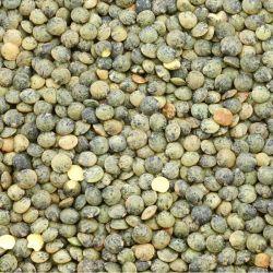 Lentilles vertes -2.5kg